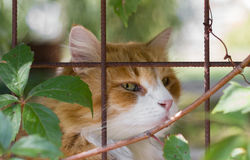 Sad cat in the cage Stock Photos