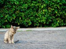 Sad Cat. Crying Cat alone royalty free stock photos