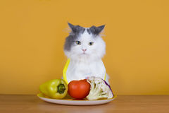 Sad cat on a diet before the emptiness of plate Royalty Free Stock Images