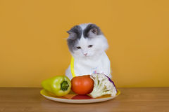 Sad cat on a diet before the emptiness of plate Stock Image