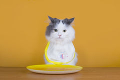 Sad cat on a diet before the emptiness of plate Royalty Free Stock Photos