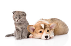 Sad cat and dog together. isolated on white background Royalty Free Stock Photos