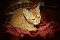 Sad Cat Home Alone Royalty Free Stock Photos