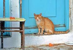 Sad cat. Sad lonely orange cat standing in front of a blue door stock images