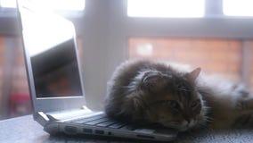 Sad cat lying on the laptop keyboard, 1920x1080. Sad cat lying on the laptop keyboard stock footage
