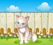 A sad cat near the wooden fence Stock Photo