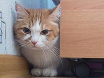 Sad cat Royalty Free Stock Photos