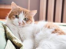 Sad cat. Portrait of yellow sad sick cat lying at home royalty free stock photos