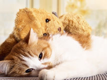 Sad cat. Portrait of yellow sad sick cat lying at home with rabbit toy stock photo
