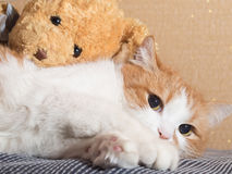 Sad cat. Portrait of yellow sad sick cat lying at home with rabbit toy stock photos