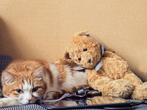 Sad cat. Portrait of yellow sad sick cat lying at home with rabbit toy Royalty Free Stock Photos