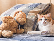 Sad cat. Portrait of yellow sad sick cat lying at home with rabbit toy Stock Photography