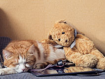 Sad cat. Portrait of yellow sad sick cat lying at home with rabbit toy Stock Images