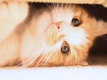 Sad cat. Red sad cat looking close up stock images