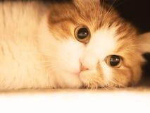 Sad cat. Red sad cat looking close up royalty free stock photo
