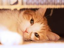 Sad cat. Red sad cat looking close up stock photo