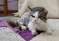 Sad cat in refuge. Cat, resting cat on a sofa,cute funny cat close up, young playful cat, domestic cat, relaxing cat Stock Photo