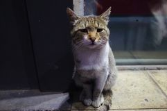 A sad cat. Sitting in the street royalty free stock photos