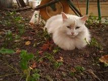 Sad cat. Sad white cat lies on the ground royalty free stock photos