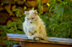Sad  cat sitting on the doghouse. Sad small cat sitting on the doghouse at summer Stock Photo