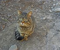 Sad cat Stock Photo