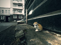 Sad cat on the street. A beautiful sad cat sits on the street next to the house in the fall in cloudy weather Stock Photo