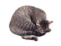 Sad cat. Sad striped cat on a white background stock photos
