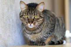 Sad cat. Sad tabby cat with spikey fur stock photo