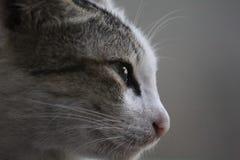 Sad Face stock image