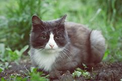 Sad cat. Tired and sad wild cat laying on the ground in the village garden stock photo