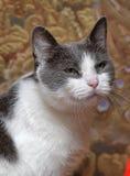 Sad  cat Royalty Free Stock Images