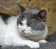 Sad  cat Stock Image