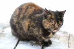 Sad cat in wintertime royalty free stock images