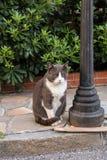 Sad charismatic street cat sitting on the sidewalk Stock Image