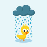 Sad Chick in the Rain on Friday the 13th. Royalty Free Stock Photography