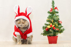Sad christmas cat Stock Images