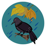 Sad crow in the rain. Sad crow sitting on the branch under leaves and hiding from rain Royalty Free Stock Image