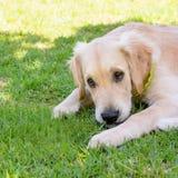 Sad cute dog stock photos