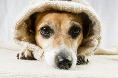 Sad cute dog Royalty Free Stock Images