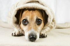 Sad cute dog Royalty Free Stock Photo