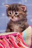 Sad cute kitten Stock Photos