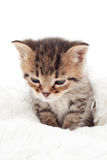 Sad cute tabby kitten Stock Images