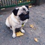 Sad cutie Royalty Free Stock Images