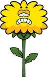 Sad Dandelion Royalty Free Stock Images