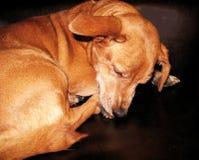 A sad dog. Close up royalty free stock photo
