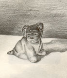 Sad dog. Pencilled picture of a sad lonely dog Royalty Free Stock Photos