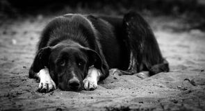 Sad dog. On the ground Royalty Free Stock Photography