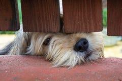 Sad dog. Under the fence Royalty Free Stock Photos