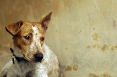 Sad Dog. Sad looking rescued stray dog. Be kind to all animals Stock Image