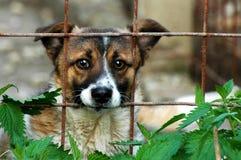 Sad dog. A sad dog locked in a pound Stock Images